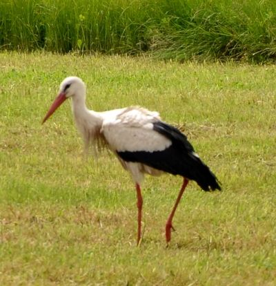 Storch 2014